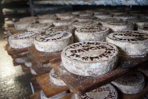 クワトロえびチーズ、都内での販売店舗は?