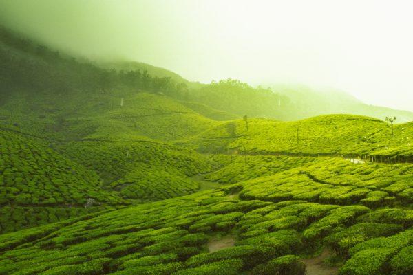 日本茶のルーツである径山茶の入れ方とその歴史。中国の緑茶・径山茶