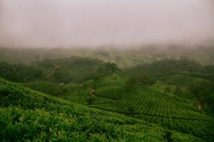 中国茶緑茶の中で知名度が高い龍井茶のアレコレ・中国茶緑茶の淹れ方